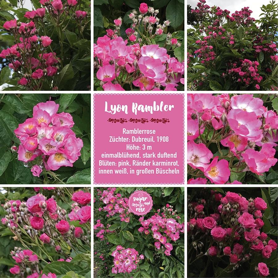 Lyon Rambler