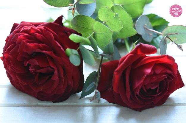 Rote-Rose1.jpg