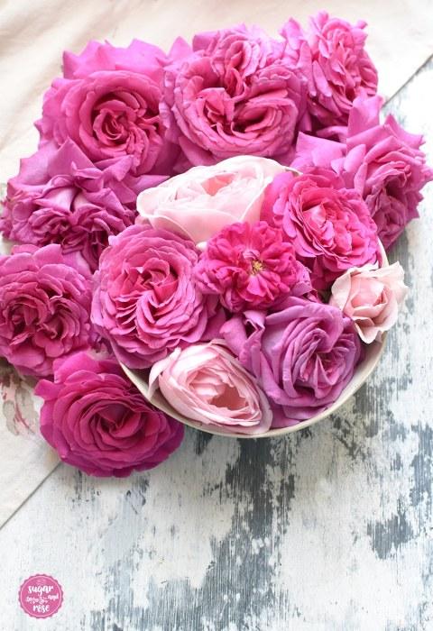 Rosa-Rosenschale