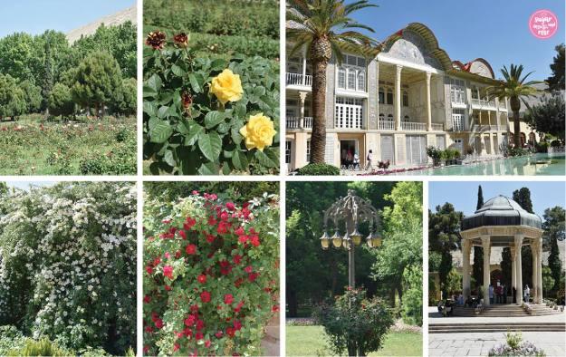 Eram-Garten in Shiraz, Persien und Rosen