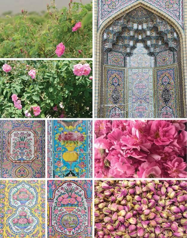 Persien-Rosen-Highlights, Persien und Rosen
