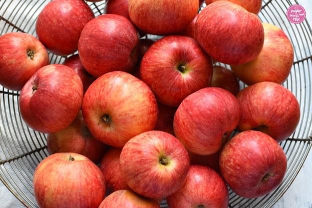 Großer flacher Metallgitter-Korb mit vielen frisch geernteten rotgestreiften Äpfeln