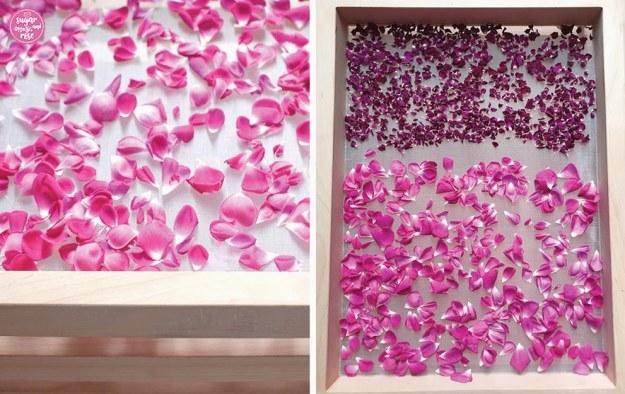 Rosenblüten frisch und getrockent auf einem mehrstöckigen Trockensieb aus Holz als Vorbereitung für die Rosenküche.