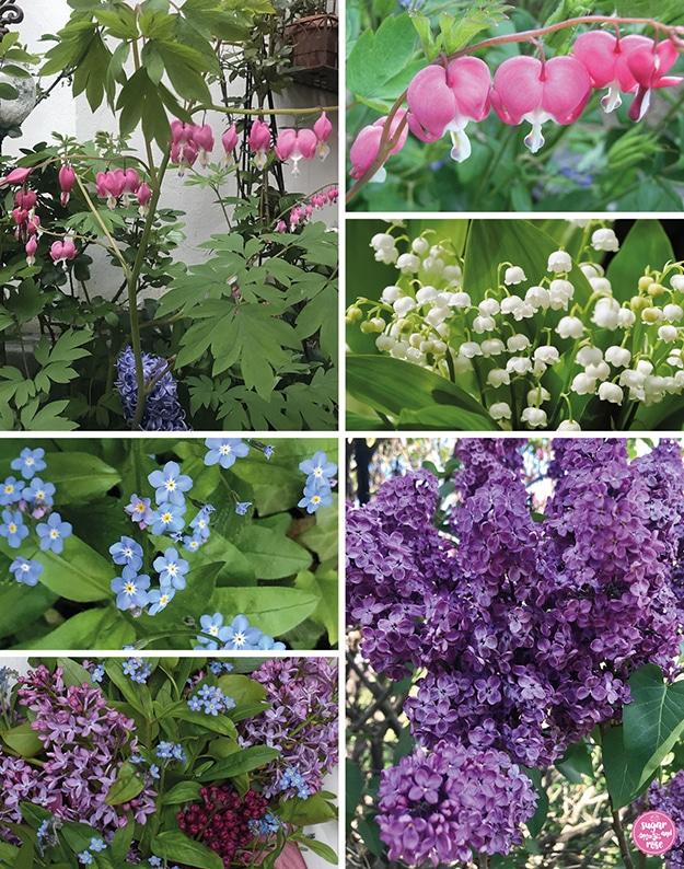 Bildkomposition mit den einzelnen Blumen: Herzblumen, Maiglöckchen, Vergissmeinnicht, dreifarbiger flieder (helllila, violett und weinrot)