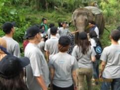 Di persimpangan jalan, kami bertemu dengan gajah yang jinak.