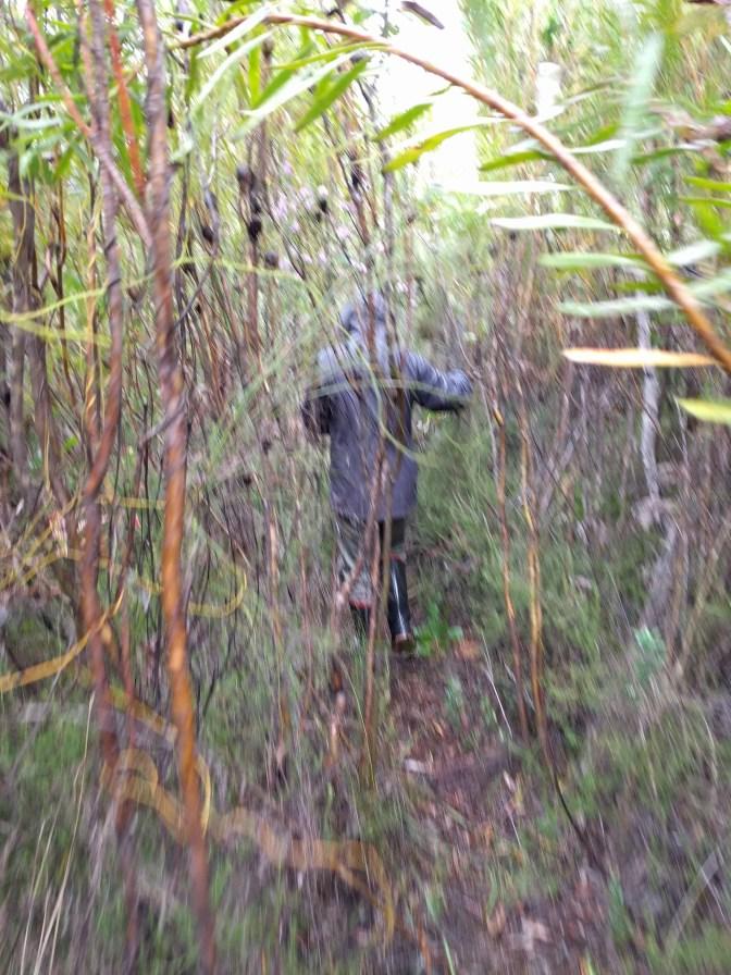 The fynbos rainforest...