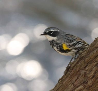 Discover the Birds of Sugarloaf