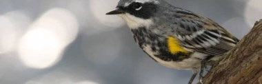 Birding at George Manitou Crosby State Park - May 19 @ Sugarloaf Cove Nature Center | Schroeder | Minnesota | United States