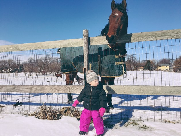 Hiking and horses in winter