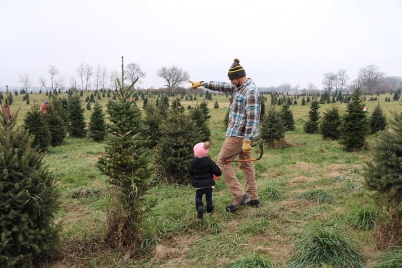 Cut Your Own Christmas Tree - Hanns Christmas Farm Wisconsin - Cut Your Own Christmas Tree - Hanns Christmas Farm Wisconsin - SUGAR