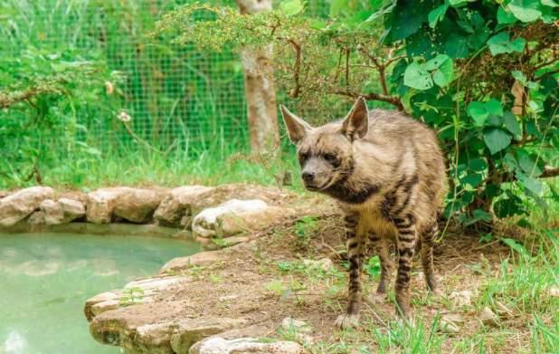 Cebu Safari And Adventure Park The Biggest Zoo In The