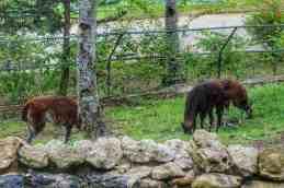 cebu-safari-zoo (20)