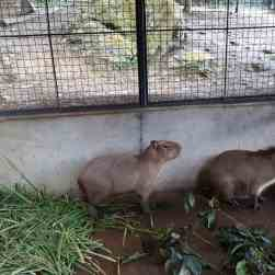 cebu-safari-zoo (3)