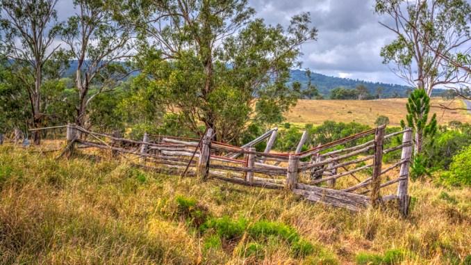 Australian Landscape-cattle race Qld