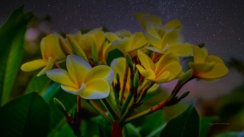 Flowers by Night