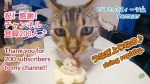 ☆ベンガル猫🐈ケイキ😺200人ありがとうスィーツ🎂(Bengal cat Keiki😻Thank you for 200 subscriber to my channel😄)