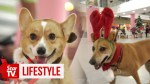 【犬猫動物動画まとめ】Christmas party with the dogs
