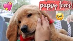 【犬猫動物動画まとめ】I want another puppy!! (girls date & shopping for xmas presents) VLOGMAS DAY 21 ♡