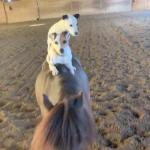 【犬猫動物動画まとめ】Two Dogs Ride On Miniature Horse's Back