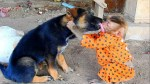 【犬猫動物動画まとめ】Puppy Blacki licks best friend monkey Soo, Puppy Blacki so sweet on monkey Soo