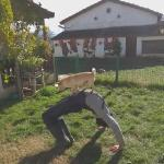 【犬猫動物動画まとめ】Guy Does Backward Cartwheel With Dog Standing on Him
