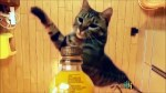 【犬猫動物動画まとめ】Cute and Funny Cats Videos Compilations   Funny Animal Fails Compilations