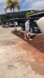 【犬猫動物動画まとめ】Man Carries Pooch Like a Purse