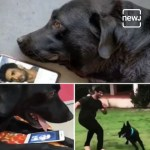 【犬猫動物動画まとめ】Sushant Singh Rajput's Dog Fudge missing him