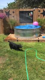 【犬猫動物動画まとめ】Dog Plays With Water Spraying From Hose