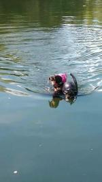 【犬猫動物動画まとめ】Dog Rides Owner's Back As He Swims