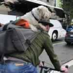 【犬猫動物動画まとめ】Dog Sits Comfortably on Owner's Back While he Rides Bicycle in Town