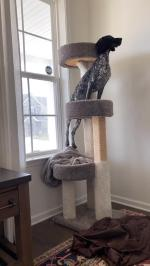 【犬猫動物動画まとめ】Dog Struggles to Sit on Cat Tree