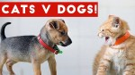 【犬猫動物動画まとめ】Funniest Cat Vs Dog Video Compilation December 2016 _ Funny Pet Videos