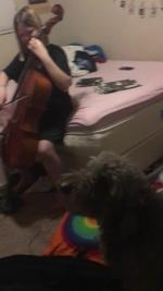 【犬猫動物動画まとめ】Dog Starts Howling as Girl Plays Cello While Practicing