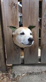 【犬猫動物動画まとめ】Dog Sticks Head Out of Hole in Fence When Called