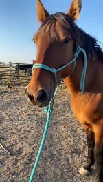 【犬猫動物動画まとめ】8-Week-Old Puppy Takes Horse for a Walk