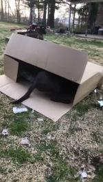 【犬猫動物動画まとめ】Kid And Dog Enjoy Playing Inside Huge Cardboard Box