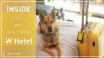 【犬猫動物動画まとめ】Review of the W Hong Kong's new animal-friendly hotel package, Pets Are Welcome