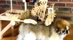 【犬猫動物動画まとめ】Woodworker builds machines that solve everyday problems