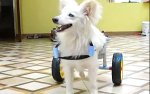 【犬猫動物動画まとめ】Coimbatore daughter-father duo design wheelchair for their dog with disability