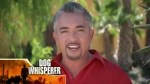 【犬猫動物動画まとめ】Dog Whisperer with Cesar Millan - Se7 - Ep9 HD Watch