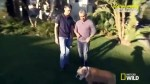 【犬猫動物動画まとめ】Dog Whisperer with Cesar Millan - Se8 - Ep2 HD Watch