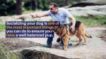 【犬猫動物動画まとめ】Top 4 Tips To Socializing Your Dog Training School Sydney