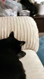 【犬猫動物動画まとめ】Dog Isn't Sure about Ear-Cleaning Kitty