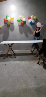 【犬猫動物動画まとめ】Dog Surprises Owners by Playing a Balloon Game