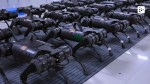 【犬猫動物動画まとめ】Unitree Robotics in China has an army of robots