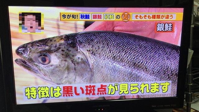 銀鮭の見た目