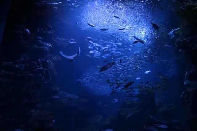 どのぐろは深海に住む