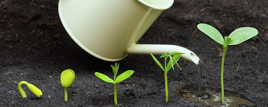 plant-a-seed