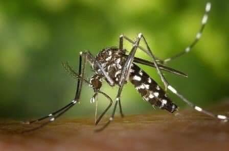 Virusi i Nilit perëndimor shfaqet edhe në Ballkan, IKSHPK vjen me njoftim